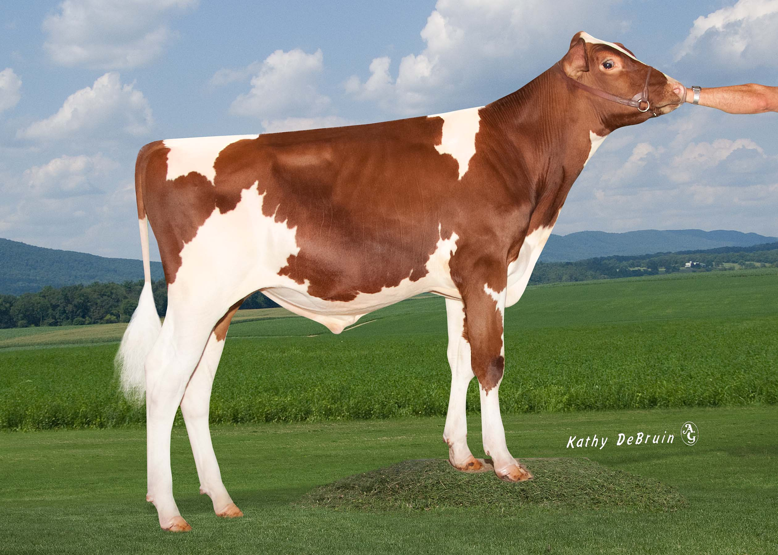GOLDWYN P Red D D MGL Deb Goldwyn P Red ET