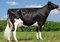 Full Sister of the Dam : Mirabell Supersire Sea VG 86